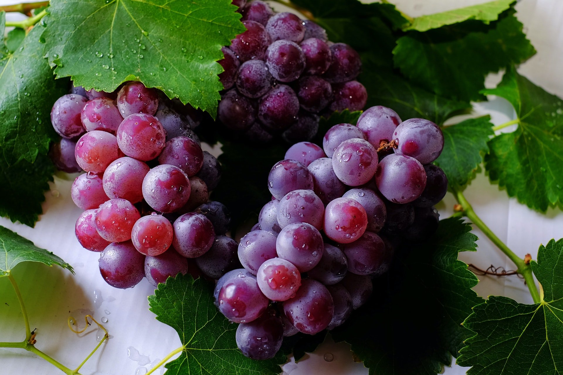 quality of grapes